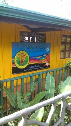 Visiting the coffie plantation