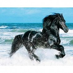 dpkiss DIY Diamond Embroidery Beach run dark horse DIY Daimond Painting Cross Stitch square Rhinestones Home Decor Most Beautiful Horses, Pretty Horses, Horse Love, Animals Beautiful, Black Horses, Wild Horses, Dark Horse, Black Stallion Horse, Horses In Snow