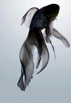 Love the tail & color. black ~ fish