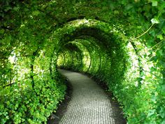 Leafed Tunnel