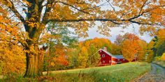 The changing leaves just look so perfect next to a big ol' red barn.