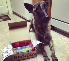 Sending care packages to US military dogs. show some TLC! Will definitely be… Military Working Dogs, Military Dogs, Military Deployment, Dog Training Equipment, War Dogs, Service Dogs, Beautiful Dogs, Dog Care, Mans Best Friend