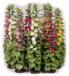 *link to All Things Small miniature plants and flowers