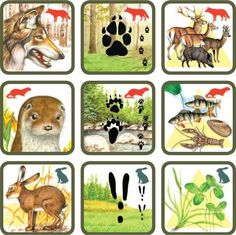 Pexetrio Plus: Savci Forest Animals, Woodland Animals, Animal Activities, Activities For Kids, Animals For Kids, Animals And Pets, File Folder Activities, Animal Tracks, Forest Theme