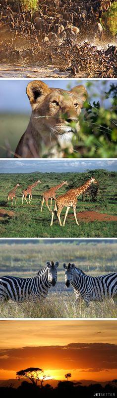 Looking for the perfect Kenya safari? Primetime Safaris is the leading tour company in Africa. Safari Adventure, Adventure Holiday, Beautiful Creatures, Animals Beautiful, Cute Animals, African Animals, African Safari, Kenya, Safari Photo