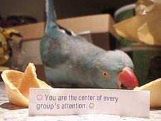 So true of parrots