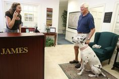 Bonz blog: Harley the Great Dane gives voice lessons - #pets #dogs