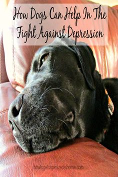 Depression is a serious illness and one that having a dog can help to fight it!