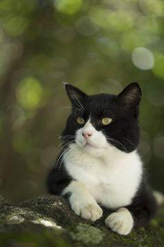 猫に逢いに行こう
