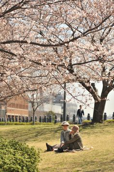 Photos of the celebration of the Sakura flowers in Yokohama