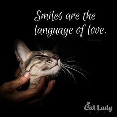 Make a kitty smile today. <3 (Like every day, of course.)