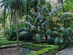 Jardin Botanico de Valencia