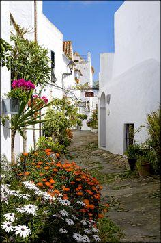Calle de Vejer de la Frontera.  Es un municipio español, de la comarca de La Janda, localizado en la provincia de Cádiz, Andalucía, España. El núcleo de la localidad se encuentra enclavado en una montaña con 200 metros sobre el nivel del mar y a 8 kilómetros de la costa, a orillas del río Barbate.