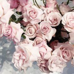 no rain, no flowers ❁ // My Flower, Fresh Flowers, Beautiful Flowers, Dried Flowers, Pink Roses, Pink Flowers, Cut Flowers, Plants Are Friends, No Rain