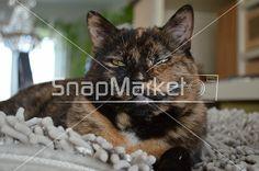 Fendi Cat