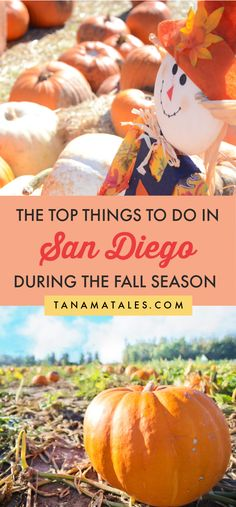 Things to do in San Diego during the fall | California | Things to do in La Jolla | Things to do in Pacific Beach | Things to do in Ocean Beach | Fall Photography | Apple Picking | Pumpkin Patch | Corn Maze | Fall Road Trip | Fall Day Trip | Apple Pie | Pumpkin Pie | Sweet Potato Pie | Fall Colors | Fall Foliage | San Diego Fall Fashion | San Diego Fall Aesthetic | Fall Ideas | Fall Bucket List | Things to do in Southern California During Fall | Julian | Apple Cider | Fall Travel | Fall…