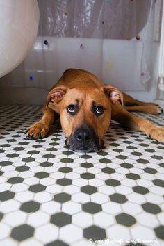 fergie-bathroom-copyright-cowbelly-pet-photography.jpg
