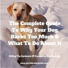 Whyis my dog barking so much?  I think you'll agree with me when I say:  It's REALLY hard to get my dog to stop barking no matter how hard I try.  Or is it?  Well it turns out you can easily get your dog to stop barking with a few simple […]