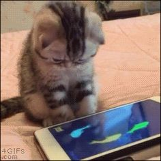 A kitten tries to grab fish on a tablet
