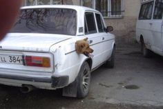 18 Dogs In Curious Predicaments