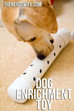 Dog Training Treats Dog Enrichment Toy -- a fun way to keep pet's healthy and happy!Dog Training Treats Dog Enrichment Toy -- a fun way to keep pet's healthy and happy! Diy Pour Chien, Dog Enrichment, Dog Puzzles, Diy Dog Toys, Homemade Dog Toys, Dog Games, Dog Activities, Dog Agility, Dog Training Tips