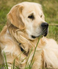 Beautiful Golden