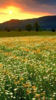 Wild Flowers Field screenshot #1