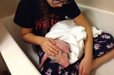 This Piglet Was Saved By A Family Before It Almost Froze To Death During The Blizzard - BuzzFeed News