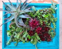 Succulents in an old picture frame. DIY instructions here:  http://www.bhg.com/gardening/container/plans-ideas/make-a-living-succulent-picture/#page=14