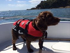 EzyDog Flotation Jackets for Dogs - keeping dogs safe for boating, sailing, kayaking or just swimming www.rockpoolbeachdogs.com