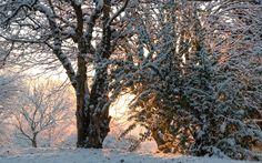 neige sur le parc