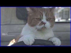 いいなCM Y!mobile ふてネコシリーズ 6本立て - YouTube