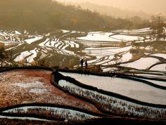 Yuanyang rice fields, China.