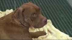 """""""O Grito do Bicho"""": Dois cachorros morrem após resgate em canil clande..."""