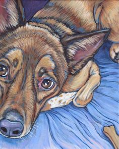 Grace the Australian Cattle Dog, painting in Acrylic on canvas from Pet Portraits by Bethany.