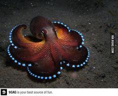 Coconut octopus! So beautiful!