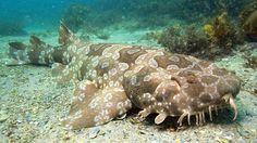 strange ocean animals