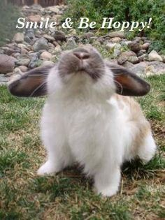 Rabbit - gorgeous image be Happy Funny Bunnies, Baby Bunnies, Cute Bunny, Bunny Rabbits, Bunny Bunny, Bunny Art, Cute Baby Animals, Animals And Pets, Funny Animals