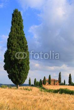 Image that sell ... Toskana toscana Val d' Orcia Pienza Traumhaus italien © PANORAMO de.fotolia.com/id/26090770