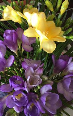 Purple and yellow fresias
