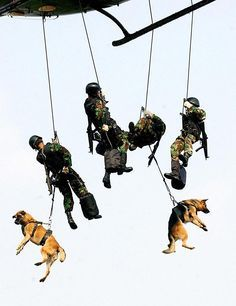 Holstered Attack Dogs Funny Funny Military Humor Dogs