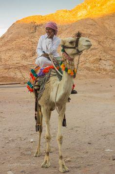 Bedouin Camel Rider, An-Nabi-Salih, Sinai Sud, Égypte par Derek N Winterburn