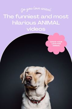 Top 10 Cutest funny animal — Small Cutest animal We Can't Get Enough Of Companion Dog Excellent. follow me for more! #dog #dogs #pet #doglover #doggy #puppy #puppies #puppys #dogoftheday #doglove #dogphotography #dogvideos #dogvideo dog, dogs, doglover Funny Animal Videos, Cute Funny Animals, Funny Dogs, Companion Dog, Cute Dogs And Puppies, Dog Photography, Super Funny, Dog Lovers, Hilarious