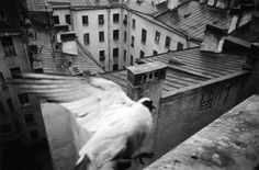 Борис Смелов. Голубь. 1975