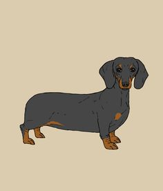 Dachshund print poster art illustration sausage dog typography. $29.00, via Etsy.