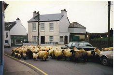 County Kerry, Ireland #thejoyoftravel www.thejoyoftravel.net