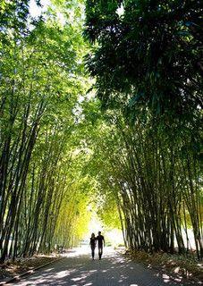 City Botanic Gardens #Brisbane #brisbanecity #garden