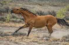 All The Pretty Horses, Beautiful Horses, Animals Beautiful, Horse Photos, Horse Pictures, All About Horses, Wild Horses, Black Horses, Wild Mustangs