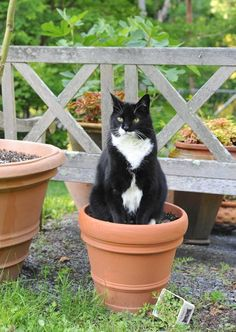 How to grow catnip, by Jack the Demon Cat. An expert guide.