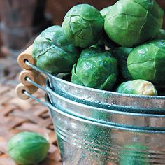 ~How to Grow Brussels Sprouts~
